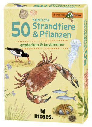 50 Strandtiere & Pflanzen